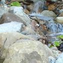 Pond Installation CA
