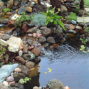 Monterey/Santa Cruz Pond Landscaping