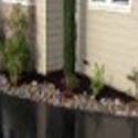 Monterey Tree/Plant Care Landscaping