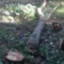Monterey/Santa Cruz tree arborist
